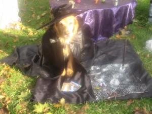 wizard-dog