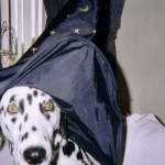 H witch costume dog 2