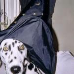 H witch costume dog 2