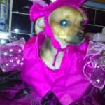 H witch costume dog 3