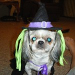 H witch costume dog 4