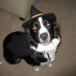 H witch costume dog 5