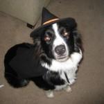 H witch costume dog 5