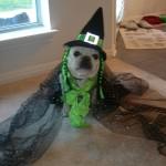 H witch costume dog 6