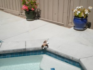 Puppy Jacuzzi's too big!