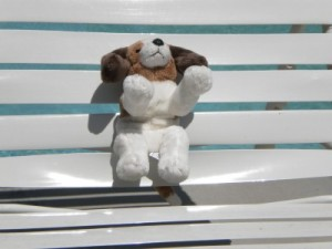 Puppy laying out by pool