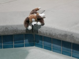 Puppy wants to go in Jacuzzi