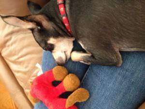 Bailey sleeping on me