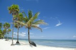 Palm trees on tropical Caribbean beach