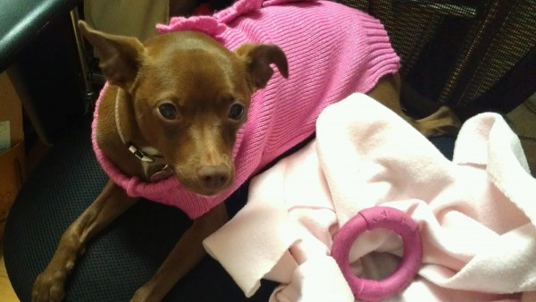 Cookie has a new sweater