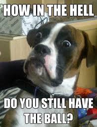 Dog is baffled