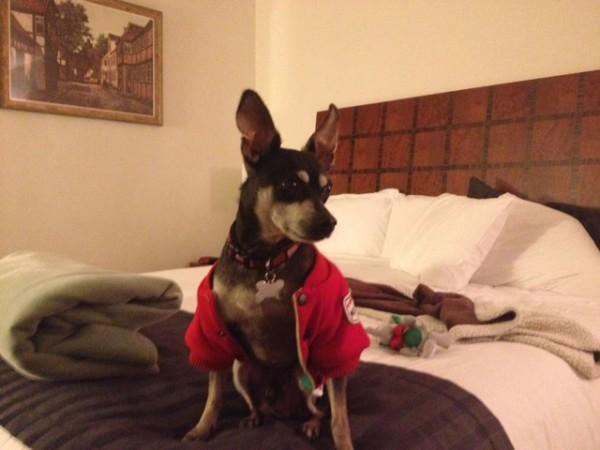 Bailey Dog Solvang