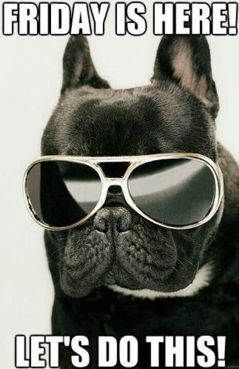 Friday Frenchie