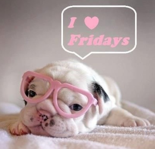 Happy Friday pup pink glasses