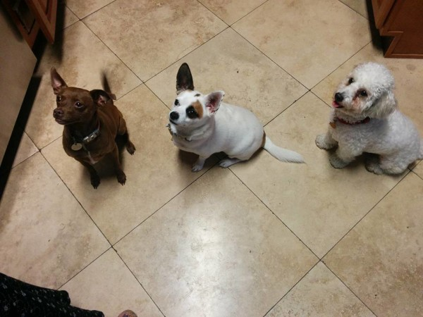 Cookie, Corky and Max