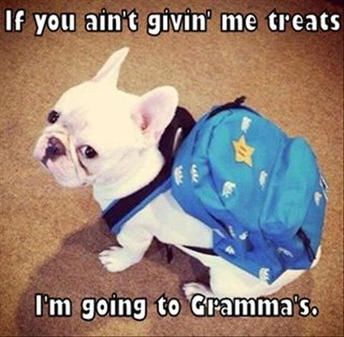 Dog wants treats or he's going to Gramma's!
