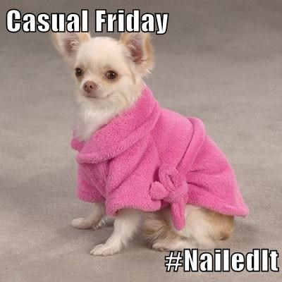 Dog casual friday