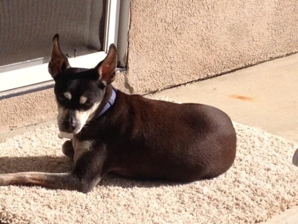 Bailey in the sun 3 16