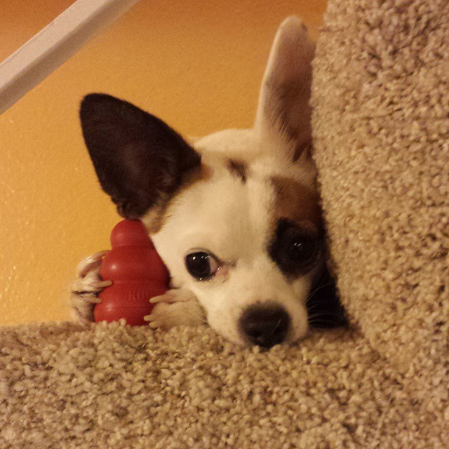 corky-holding-his-toy-so-his-sister-cant-get-it