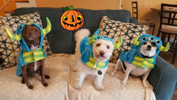 halloween-2016-cookie-corky-and-max