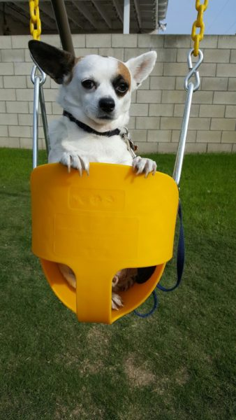 corky-loves-to-swing